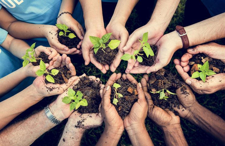 People Hands Cupping Plant Nurture Environmental; Shutterstock ID 646067692; purchase_order: Blog Post; job: Blog Post
