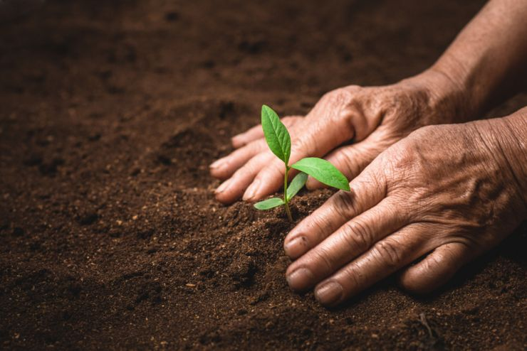 Hands of farmer growing plant a tree natural background,Plant a tree growing plant The soil and seedlings in the old hand
